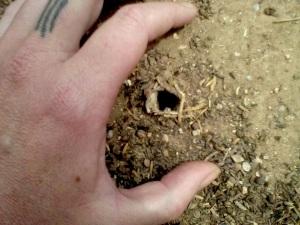 Mor' Spider Hole